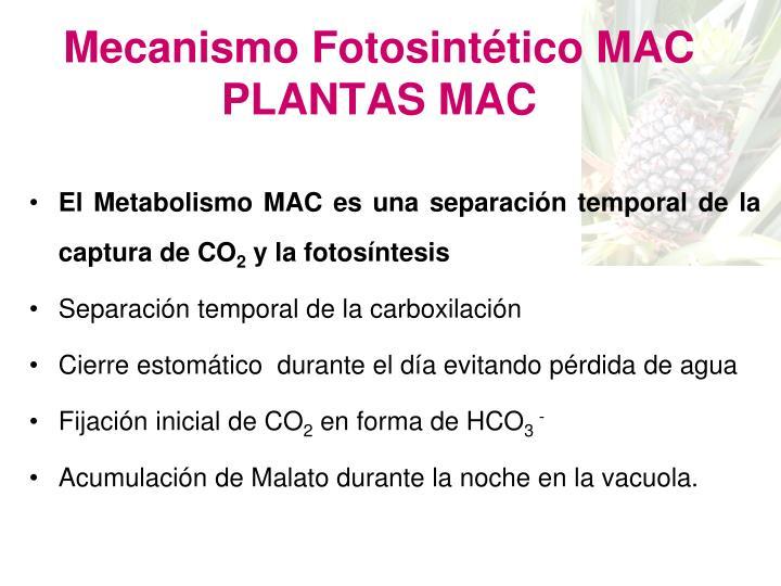 Mecanismo Fotosintético MAC PLANTAS MAC