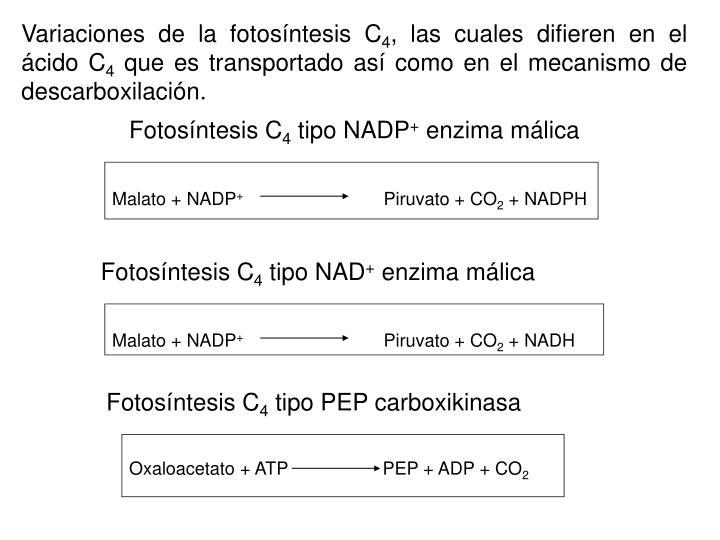 Variaciones de la fotosíntesis C