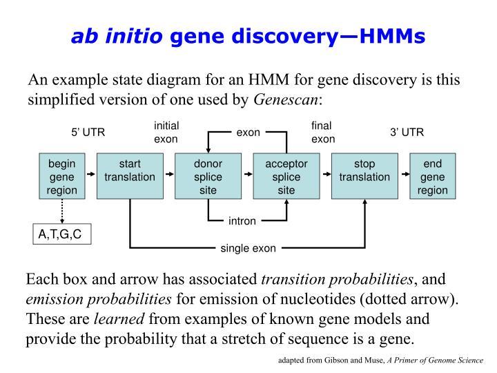 begin gene region