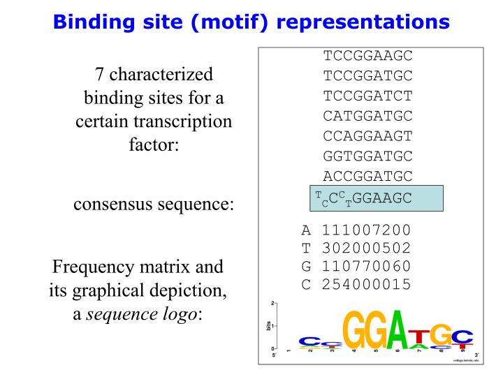 Binding site (motif) representations