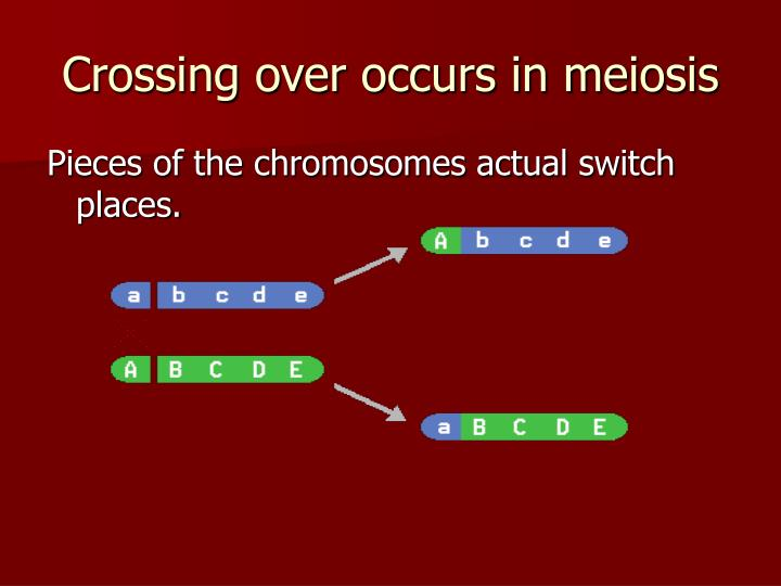 Crossing over occurs in meiosis