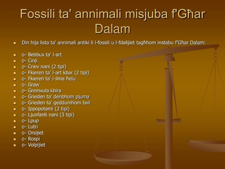 Fossili ta' annimali misjuba f'Għar Dalam