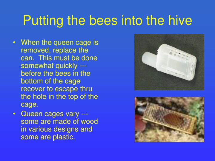 Putting the bees into the hive