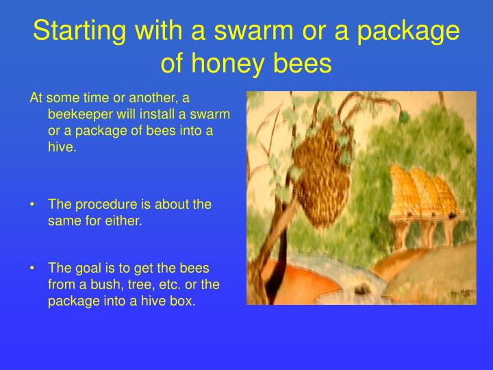 Starting with a swarm or a package of honey bees