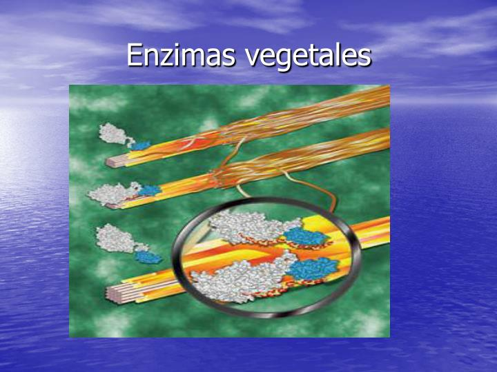 Enzimas vegetales