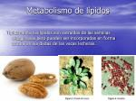 metabolismo de l pidos
