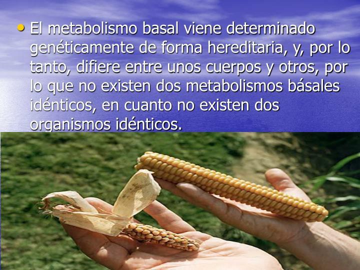 El metabolismo basal viene determinado genéticamente de forma hereditaria, y, por lo tanto, difiere entre unos cuerpos y otros, por lo que no existen dos metabolismos básales idénticos, en cuanto no existen dos organismos idénticos.