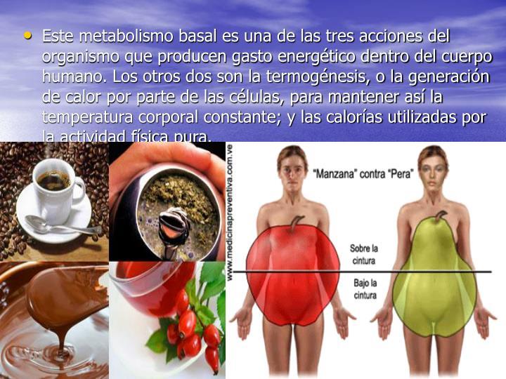 Este metabolismo basal es una de las tres acciones del organismo que producen gasto energético dentro del cuerpo humano. Los otros dos son la termogénesis, o la generación de calor por parte de las células, para mantener así la temperatura corporal constante; y las calorías utilizadas por la actividad física pura.