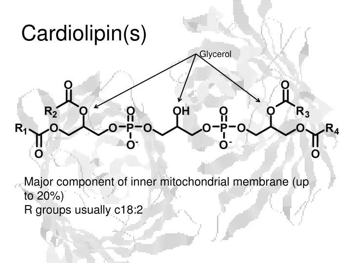 Cardiolipin(s)