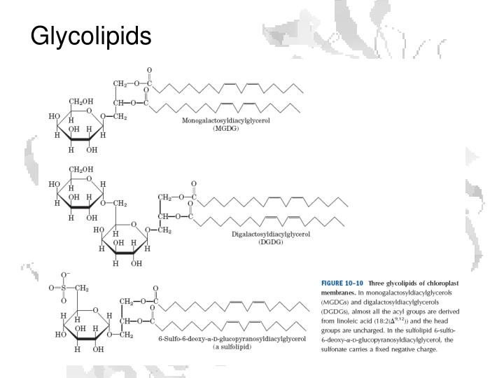 Glycolipids