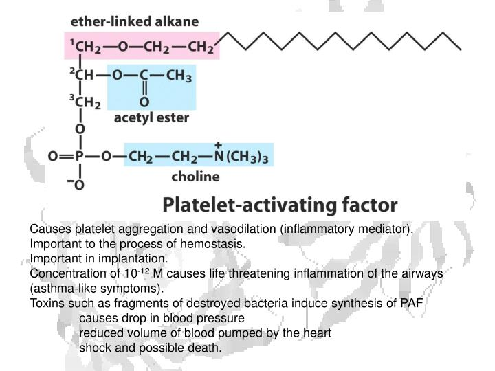 Causes platelet aggregation and vasodilation (inflammatory mediator).