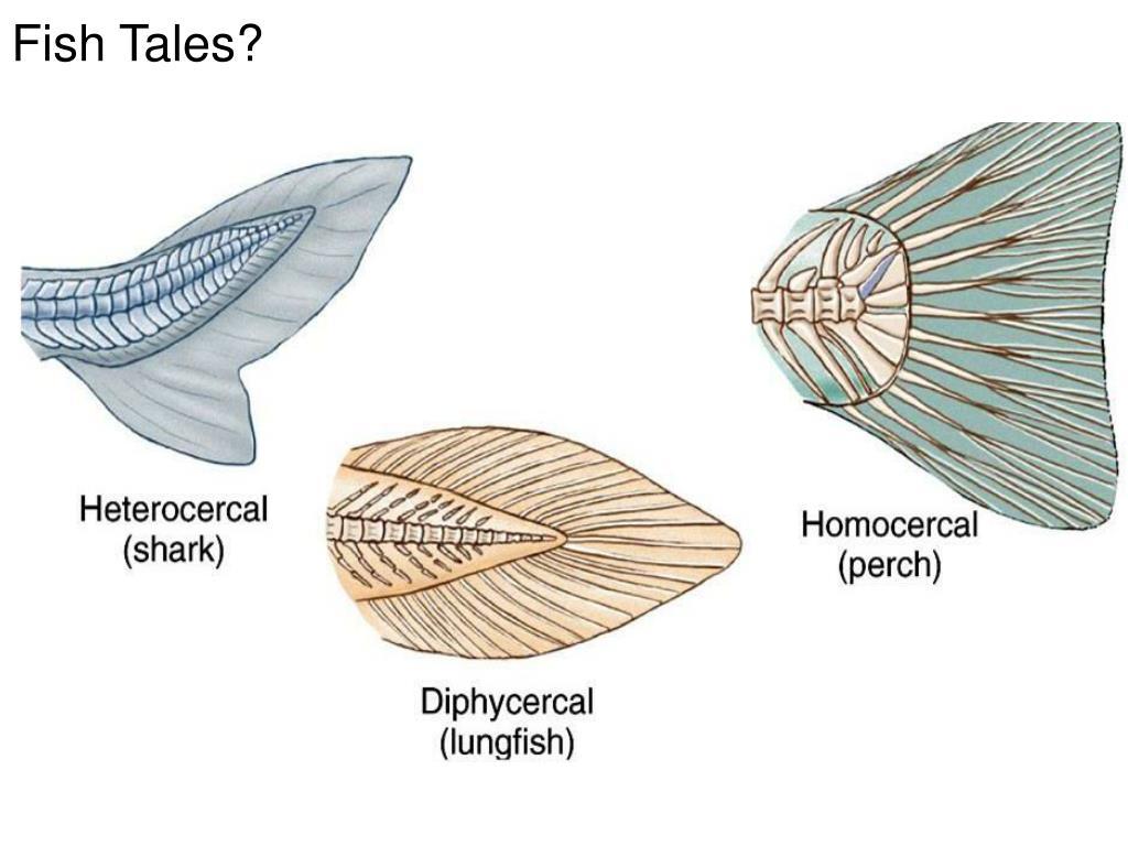 Fish Tales?