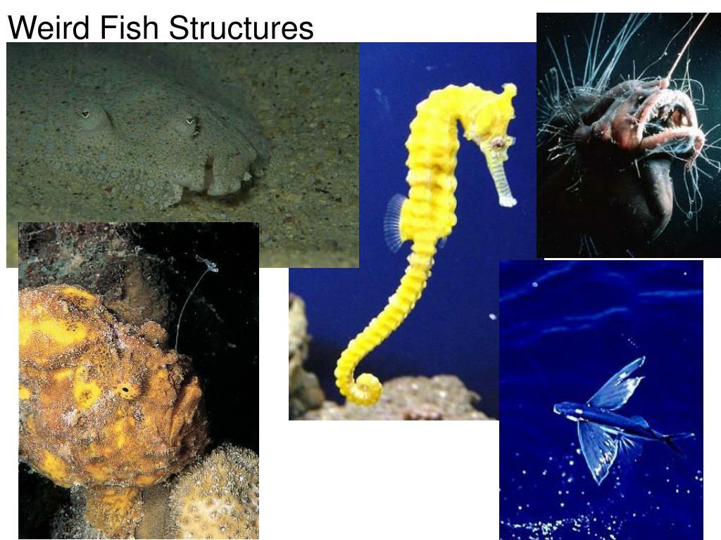 Weird Fish Structures
