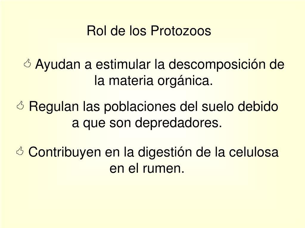 Rol de los Protozoos