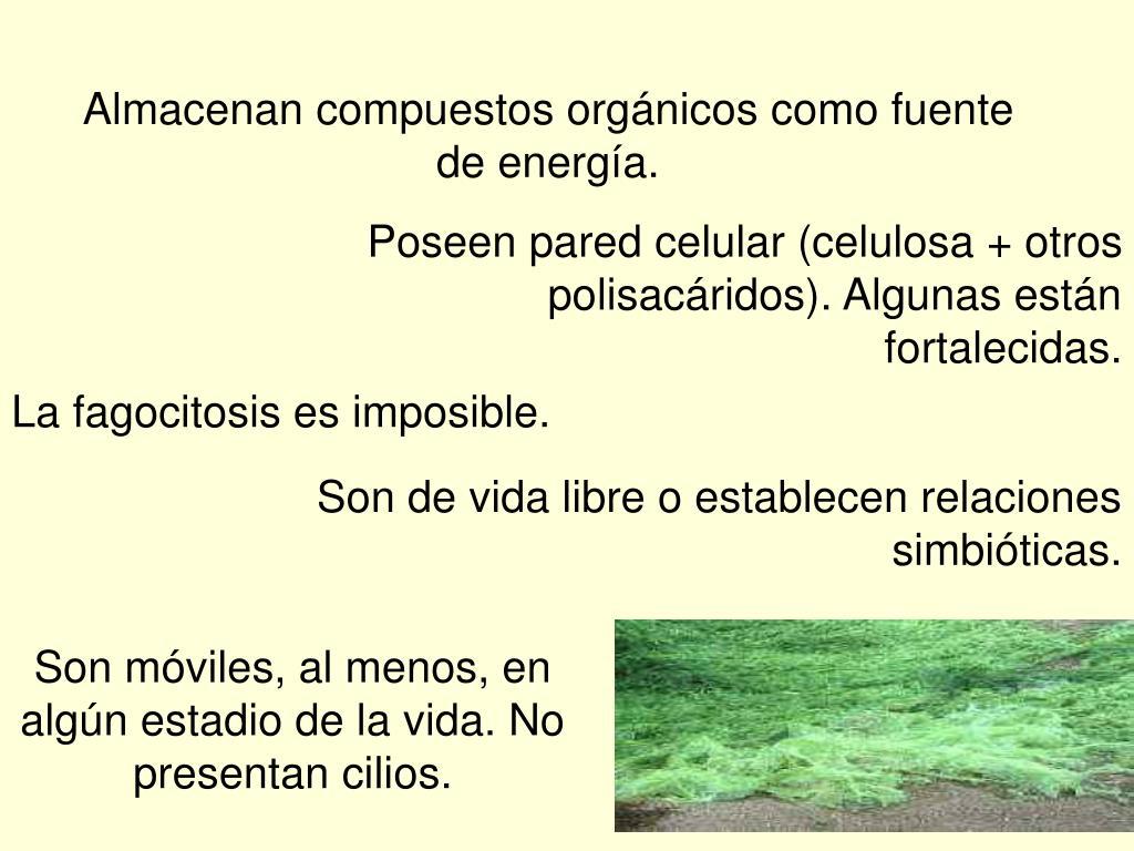 Almacenan compuestos orgánicos como fuente de energía.