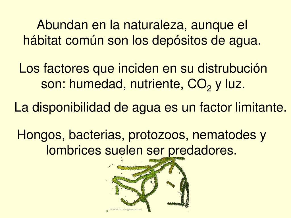 Abundan en la naturaleza, aunque el hábitat común son los depósitos de agua.