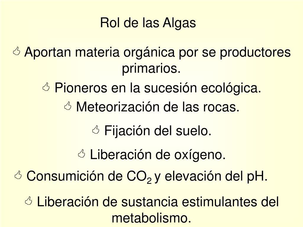 Rol de las Algas