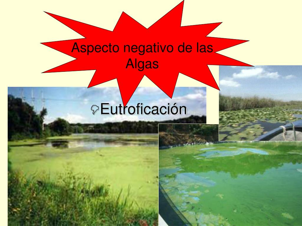 Aspecto negativo de las Algas