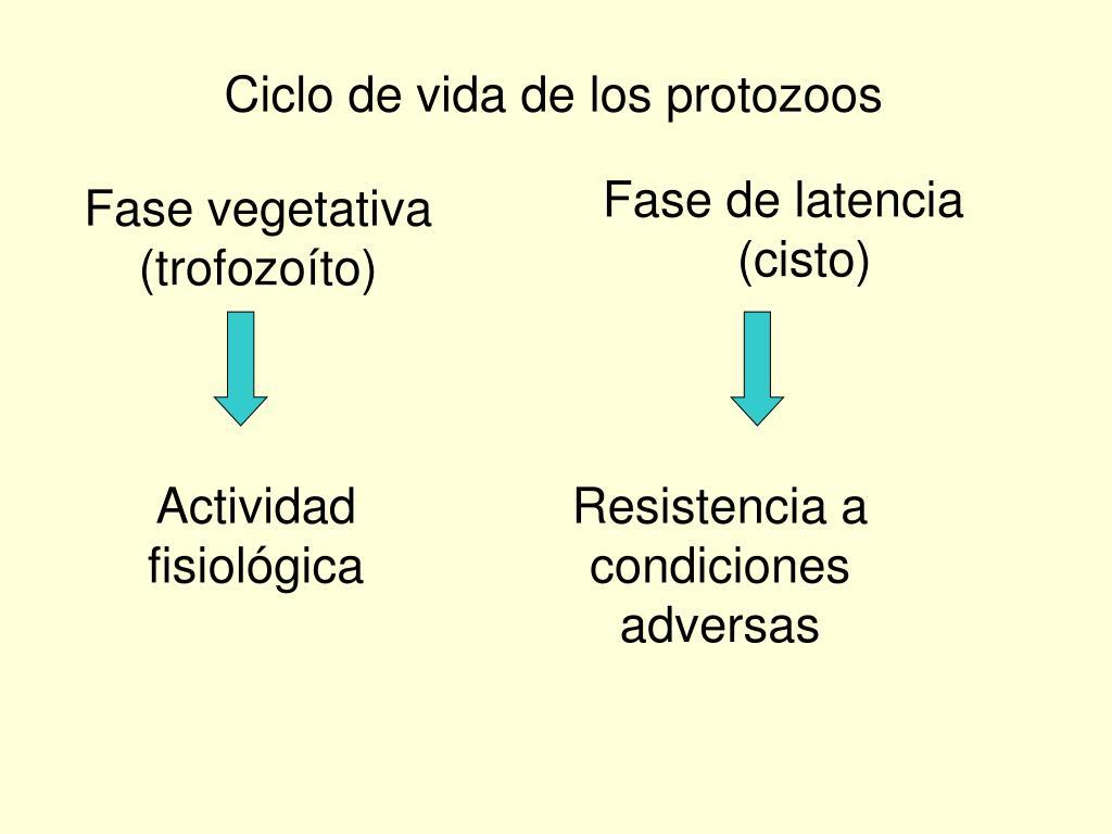 Ciclo de vida de los protozoos