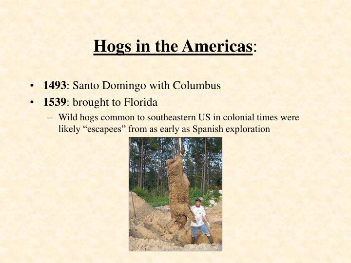 Hogs in the americas