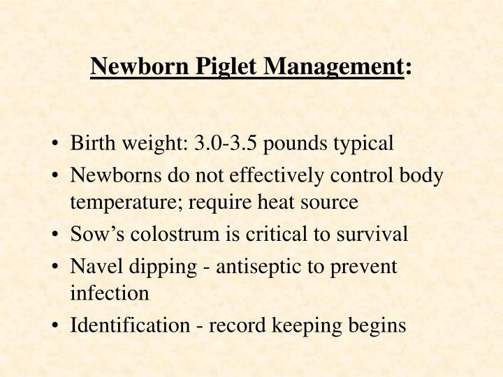 Newborn Piglet Management