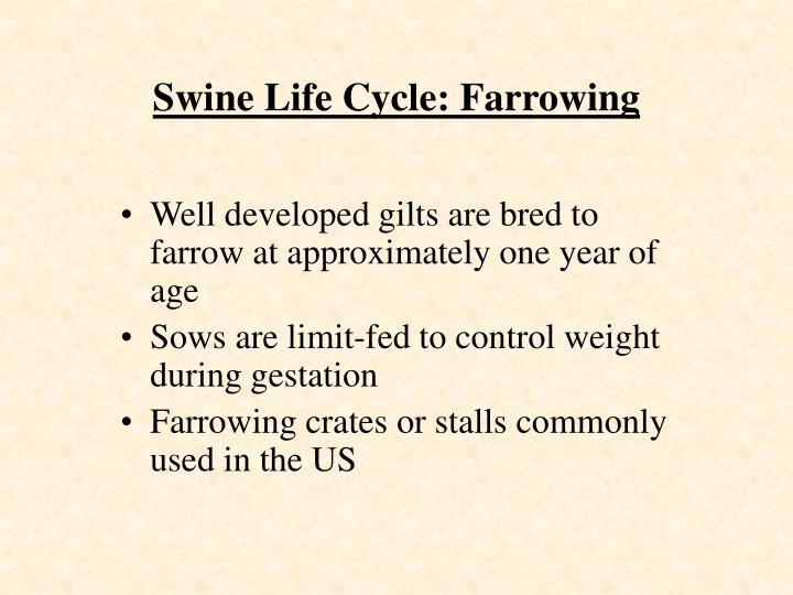 Swine Life Cycle: Farrowing