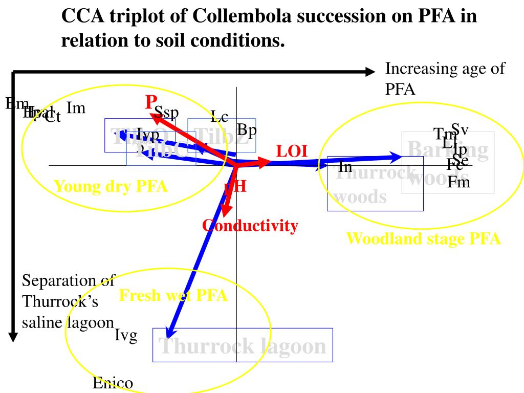 CCA triplot of Collembola succession on PFA in relation to soil conditions.