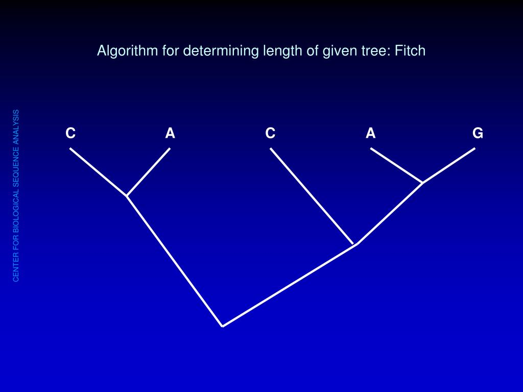 Algorithm for determining length of given tree: Fitch