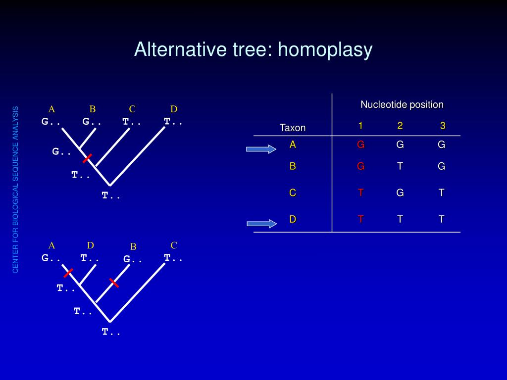Alternative tree: homoplasy