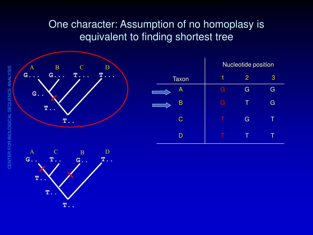 One character: Assumption of no homoplasy is equivalent to finding shortest tree