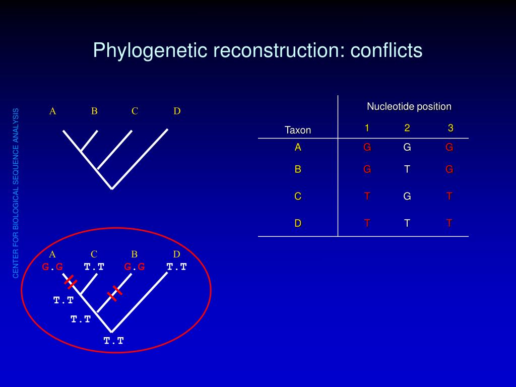 Phylogenetic reconstruction: conflicts