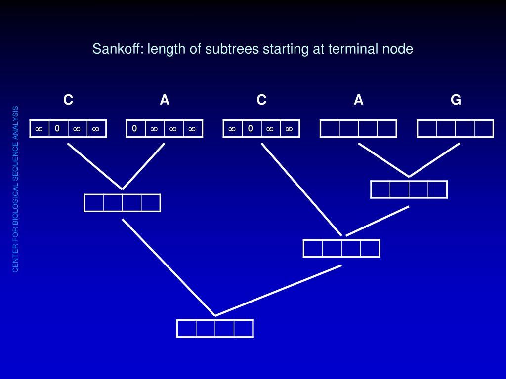 Sankoff: length of subtrees starting at terminal node