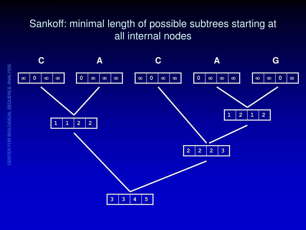 Sankoff: minimal length of possible subtrees starting at all internal nodes