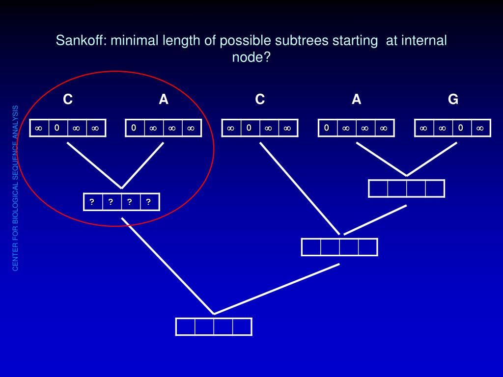 Sankoff: minimal length of possible subtrees starting  at internal node?