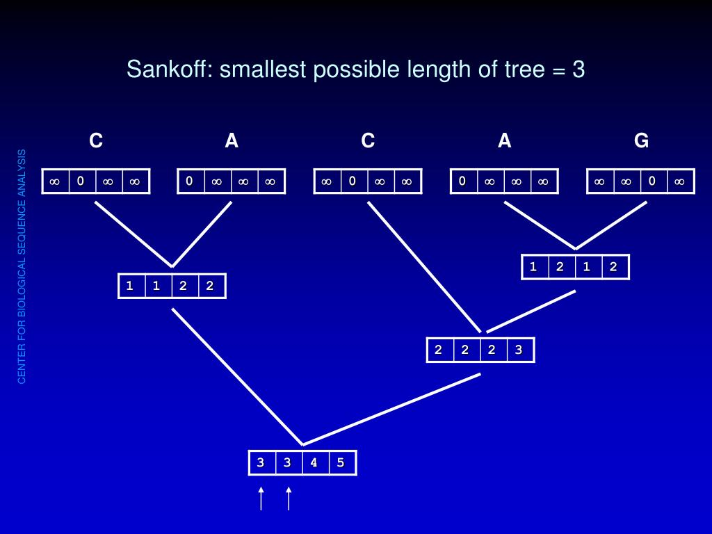 Sankoff: smallest possible length of tree = 3