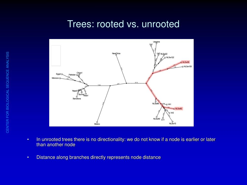 Trees: rooted vs. unrooted