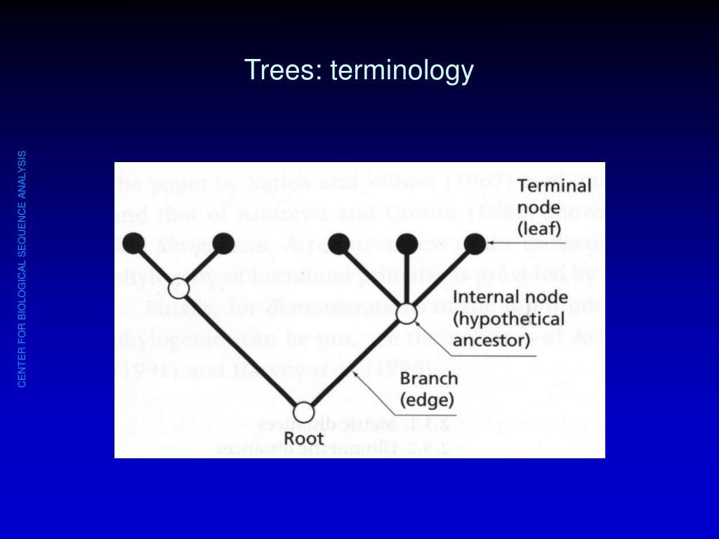 Trees: terminology
