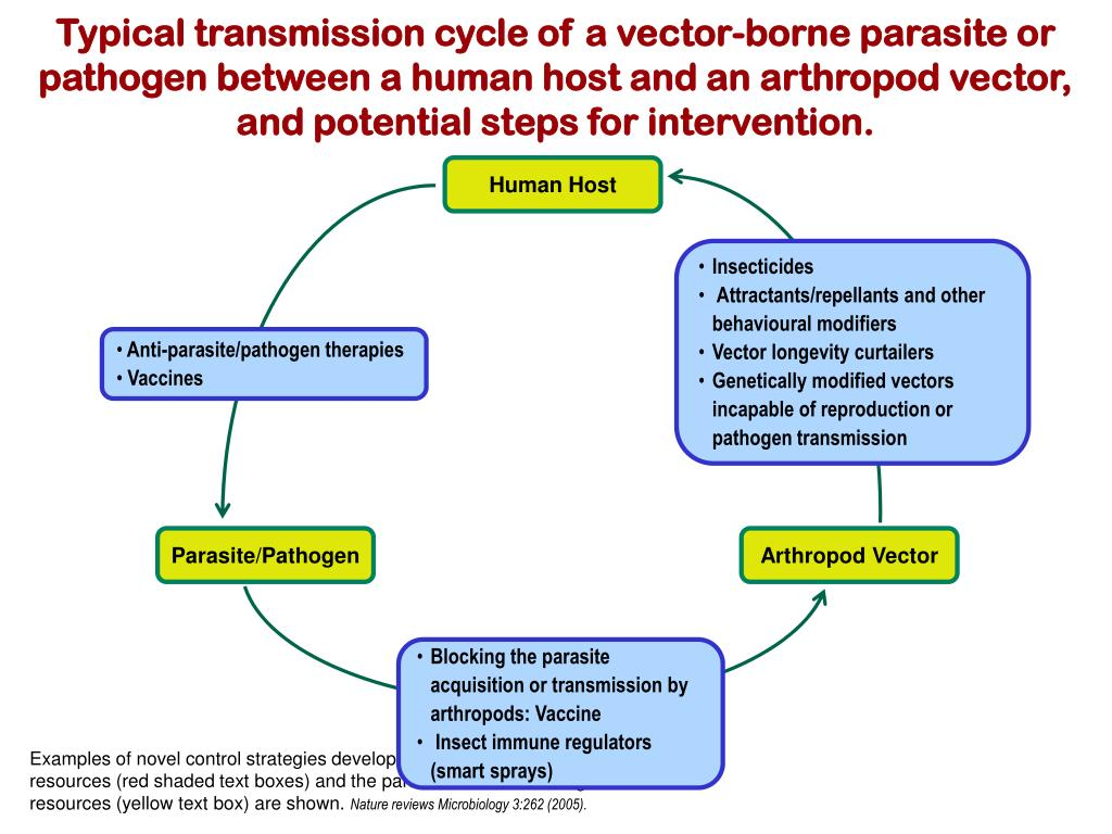 Typical transmission cycle of a vector-borne parasite or pathogen between a human host and an arthropod vector, and potential steps for intervention.