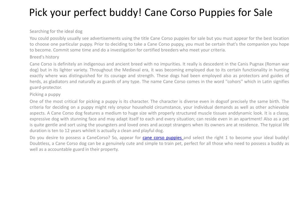 Pick your perfect buddy! Cane Corso Puppies for Sale