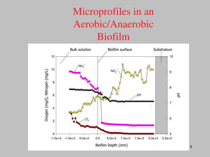 Microprofiles in an Aerobic/Anaerobic Biofilm