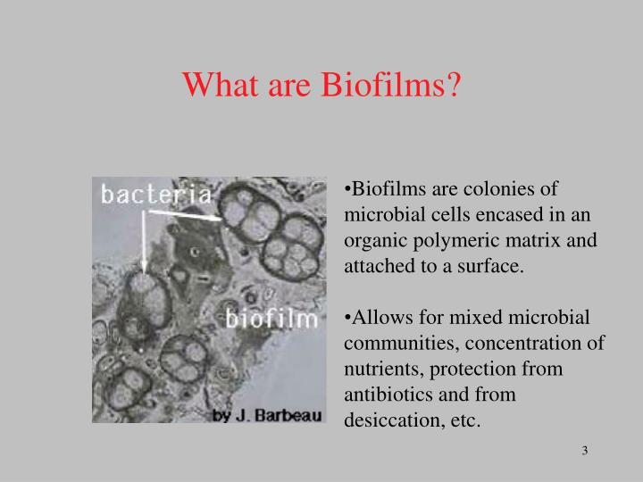 What are biofilms