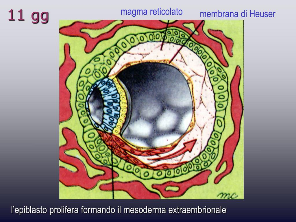 magma reticolato
