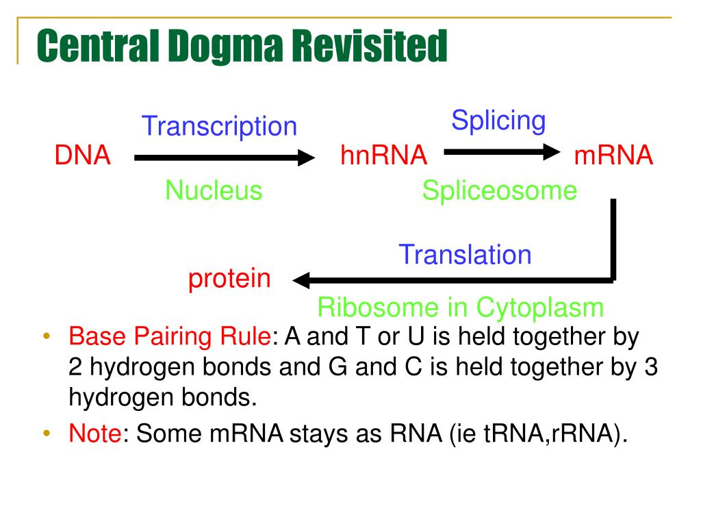 Central Dogma Revisited