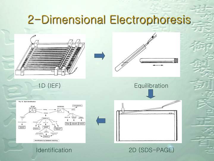 2-Dimensional Electrophoresis