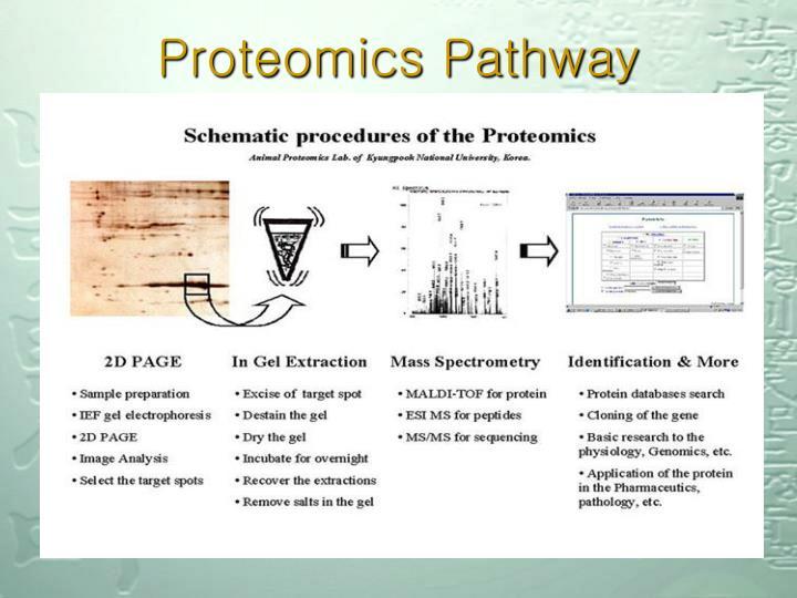Proteomics Pathway