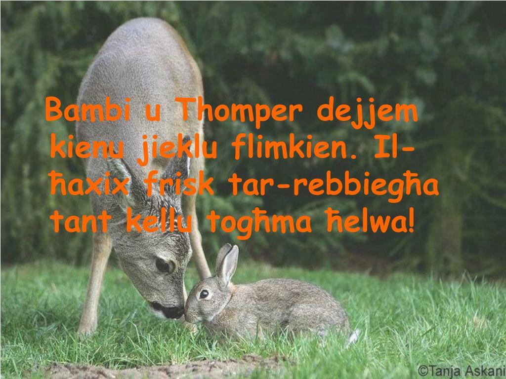 Bambi u Thomper dejjem kienu jieklu flimkien. Il-ħaxix frisk tar-rebbiegħa tant kellu togħma ħelwa!
