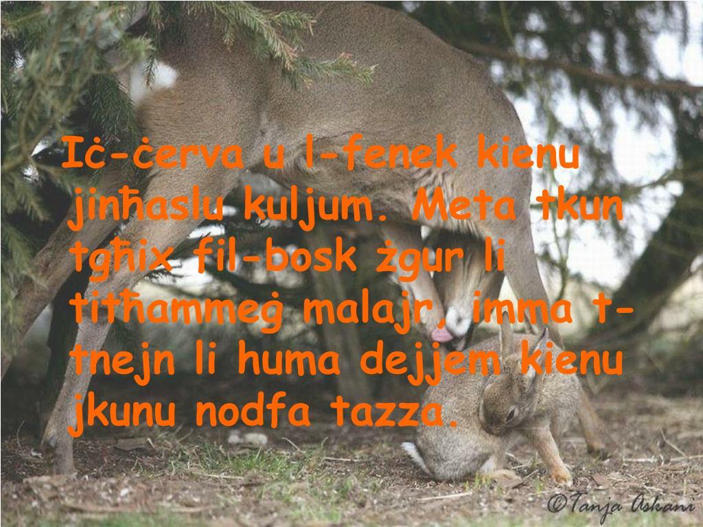 Iċ-ċerva u l-fenek kienu jinħaslu kuljum. Meta tkun tgħix fil-bosk żgur li titħammeġ malajr, imma t-tnejn li huma dejjem kienu jkunu nodfa tazza.