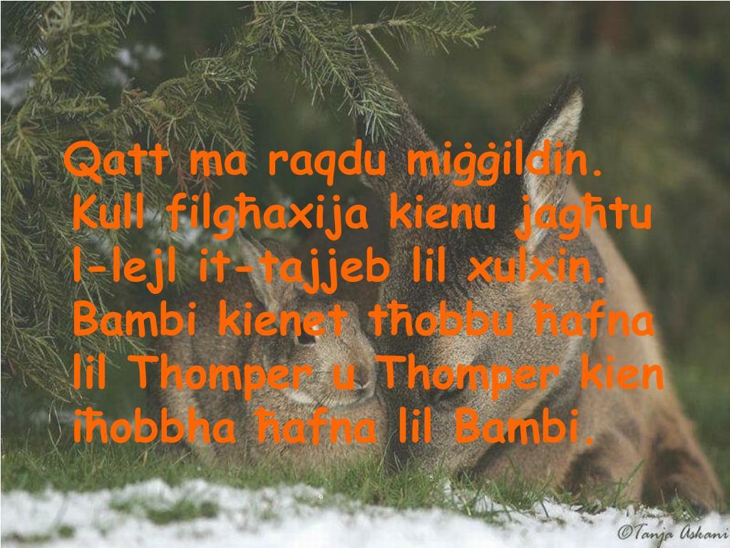Qatt ma raqdu miġġildin. Kull filgħaxija kienu jagħtu l-lejl it-tajjeb lil xulxin. Bambi kienet tħobbu ħafna lil Thomper u Thomper kien iħobbha ħafna lil Bambi.