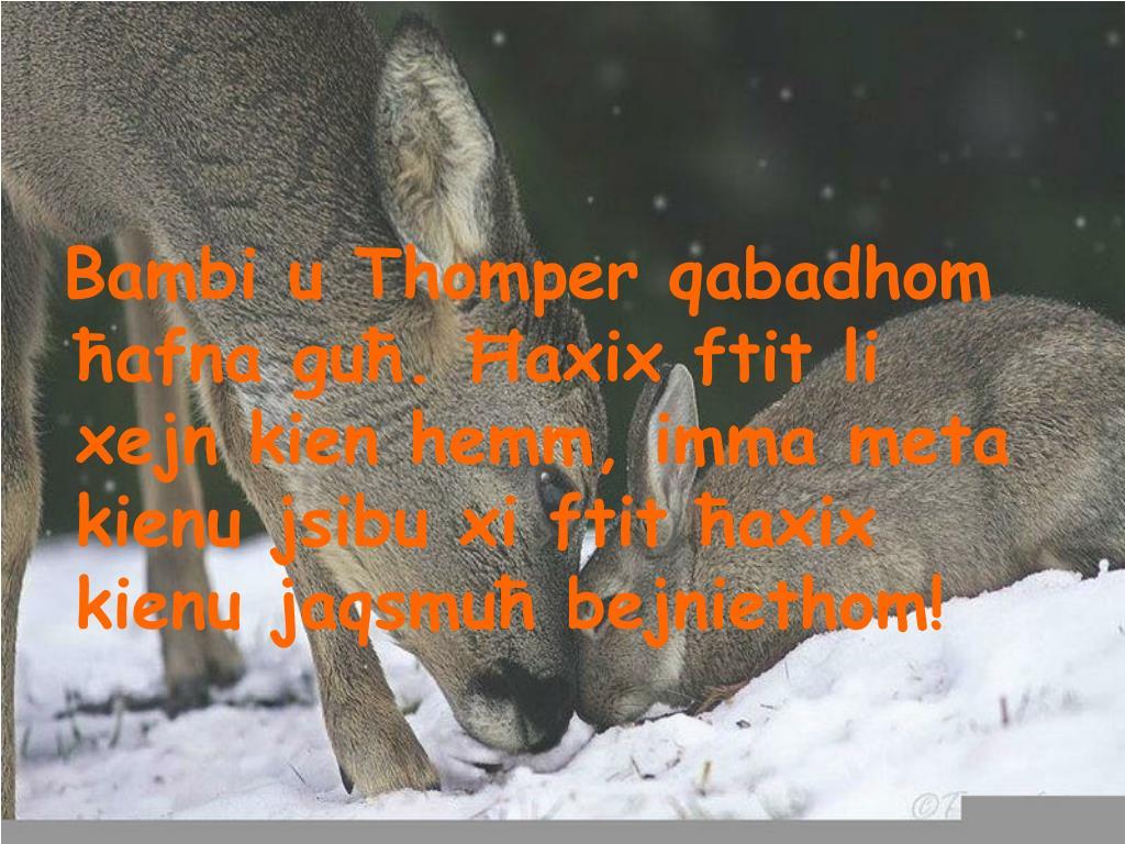 Bambi u Thomper qabadhom ħafna guħ. Ħaxix ftit li xejn kien hemm, imma meta kienu jsibu xi ftit ħaxix kienu jaqsmuħ bejniethom!