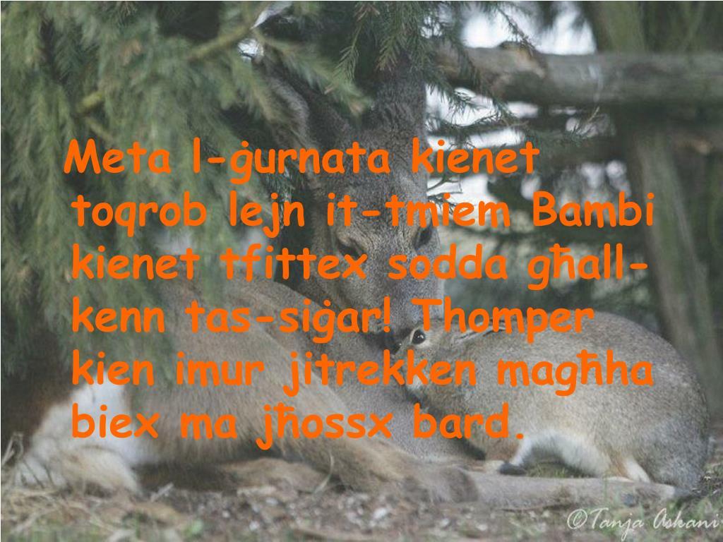 Meta l-ġurnata kienet toqrob lejn it-tmiem Bambi kienet tfittex sodda għall-kenn tas-siġar! Thomper kien imur jitrekken magħha biex ma jħossx bard.